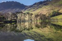 The Buttermere Rabbit, Lake District, UK