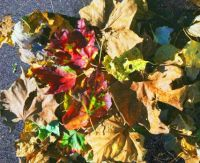 Fall.  Down.