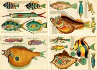 The Many, Many Colorful Fishies.