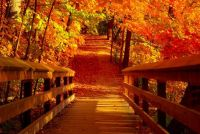 Theme ~ Fall Colors