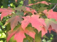 Fall Colors at Eastern Kentucky University 2