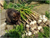 Harvested  -  Máme sklizeno