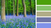 Bluebells and Beech Trees