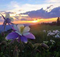 Columbine & Sunset