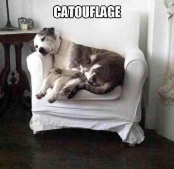 The Art of Catouflage
