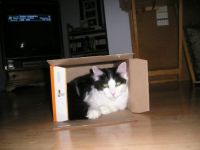 Brandee in a box
