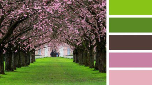 Path Under the Sakura