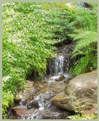 Waterfall, Garvan Gardens (2)