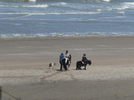 The Northern beach of Noordwijk. A lady went that long walk too.. so her kids could take their ponies to the beach.