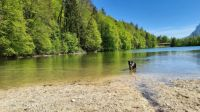 Chico in the Stimmersee