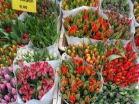 Tulips - Flower market in Amsterdam