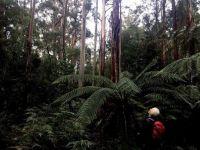 Tall Trees: Mt Field National Park 9 June 2021