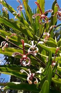 Orchid Garden, Bali