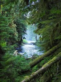 McKenzie River, Oregon  4169