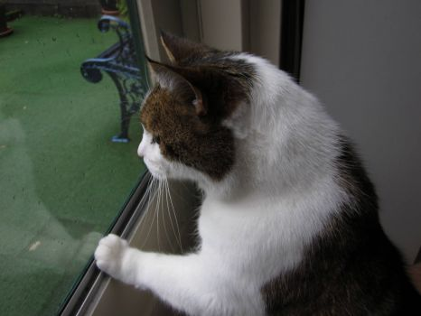Goofie:  Raining Cats&Dogs huh???....yeah right!....I don't see them