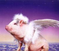 Angel Piggie
