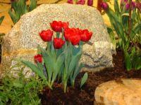 Bostin flower Show display