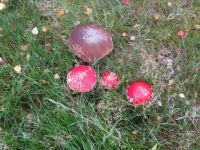 Toadstools in the Highlands 2