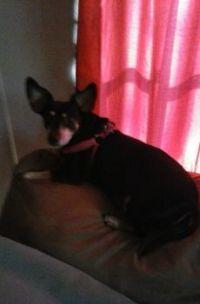My pretty Lula