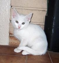 2007-Baby Bella Kitty