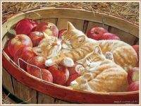 Apples and Oranges (Medium)