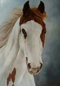 Equestrian Dreams Horse