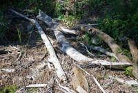 Driftwood, Fort DuPont, DE