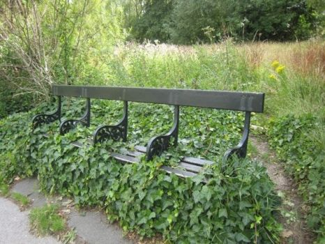 Hampstead Heath bench