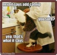 Next it says add catnip