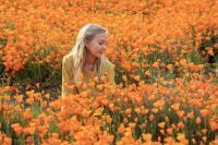 A field full of california poppies
