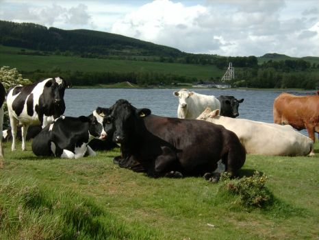 Lochore Meadows Country Park, Fife