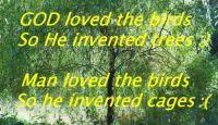 God loved the birds ...