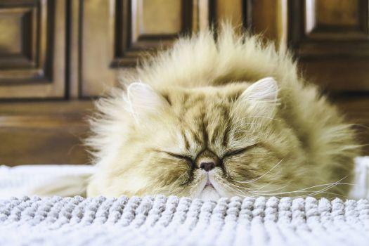 Marv Asleep