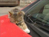 Another daft cat sleeping