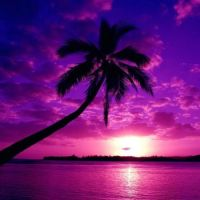 """Pink & Purple Tropical Sunset."""