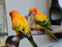 Birds at Kalahari will fly to you if you have a dollr bill in your hand!