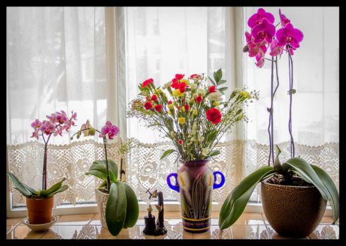 My wonderful orchids & flowers