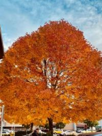 The colors of fall 3