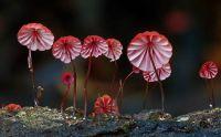 pink mushrooms timelife photos