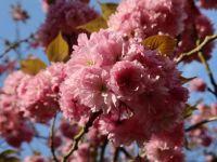 blossom.v1