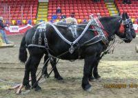 THEME - HORSES