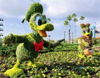 Donald & Daisy Duck Topiary