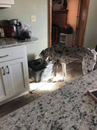 I know...Lets get a dog that matches our counter tops.