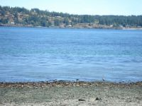 Shoreline in Campbell River, BC