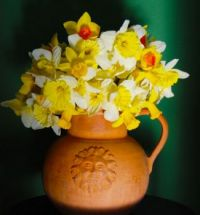 Pitcher of daffodils