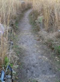 Path surrounded by tall grass....