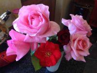 Montagu Roses Oct 15