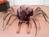 Best Halloween Pet Costume EVER!