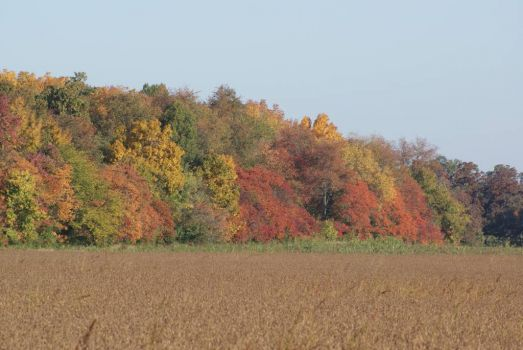 Fall ~ Southern Illinois