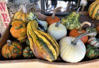 Gourds at Skyland Lodge